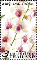 Thailand_2011_Orchids_c