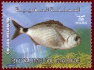 218px-Morocco_2009_marine_fish_b